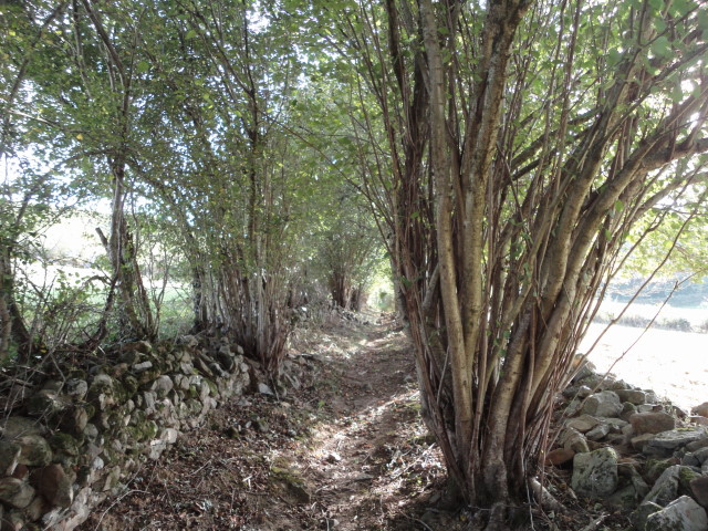 Part of the trail was inside a row of trees and hedges separating two fields.