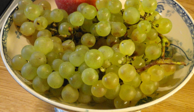 Chasselas grapes from Moissac, about 2 hours from our house.