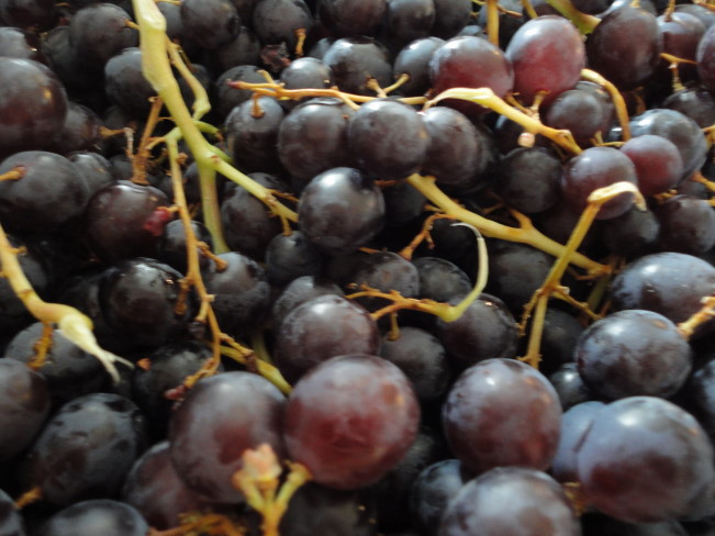Red muscat grapes from just north of Salies en Bearn.